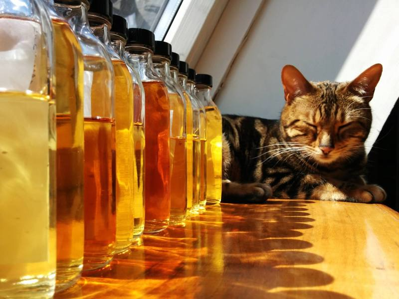 Whisky_cat